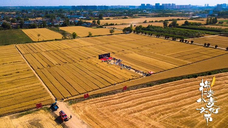 第五届中国杨凌小麦文化节开幕