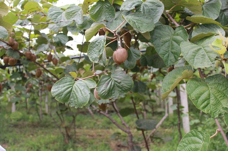 现代农业技术培训班在杨凌成功举办