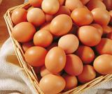 蛋鸡专用强化型维生素预混料
