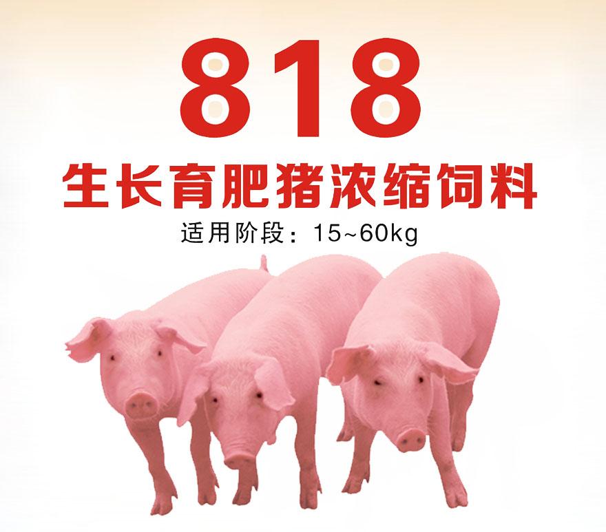 生长育肥猪浓缩饲料818