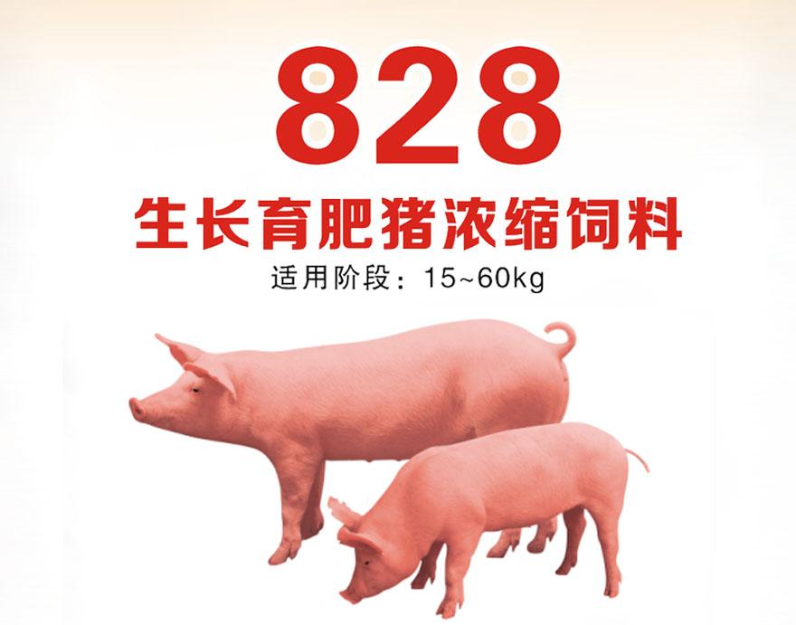 生长育肥猪浓缩饲料828