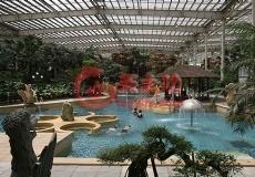 室内泳池仿真景观