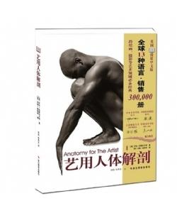 艺用人体结构 艺用人体解剖 人体艺术美院实用人像素描解剖标准 绘画素描速写教程动漫素描书入门教材伯里曼人体结构